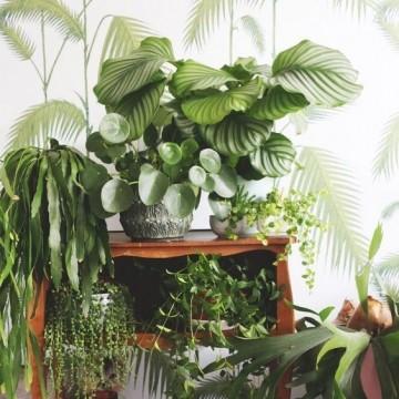 10 растения, незаменими за пречистването на въздуха у дома