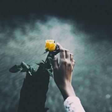 Една българска роза... във Виена