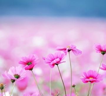 Най-хубавата поема за цветята