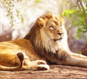 Какво казва за теб седмицата, в която си роден: Лъв II