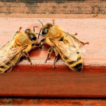 Какво да правим, когато ни ужили оса, пчела или стършел?
