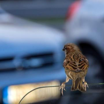 Песента на птиците трябва да си я заслужиш!