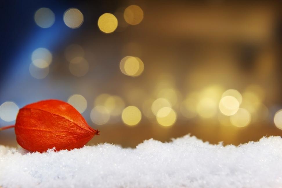 Тайната градина: Лятото започва през декември