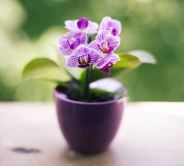 За орхидеите или добро, или нищо!