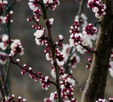 """""""Пак ухае на цвят, пак на пролет ухае"""""""