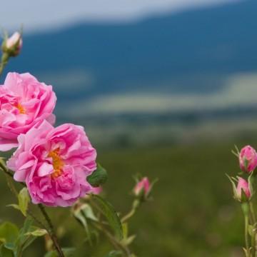 Уикенд маршрут: Там, в сърцето на Розовата долина