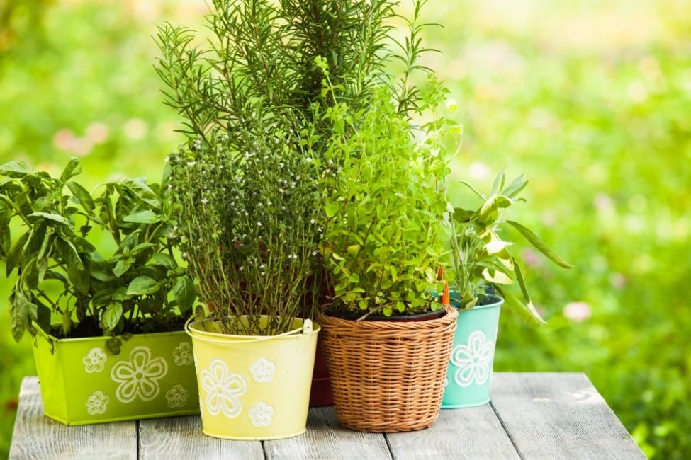 Петте най-подходящи растения за градина на балкона
