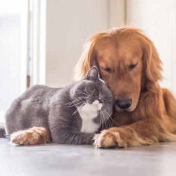 Котките и кучетата могат да виждат духове?