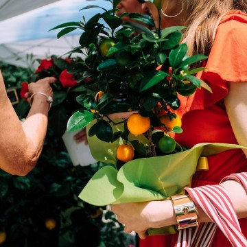 Лимоновите дръвчета на семейство Тиока