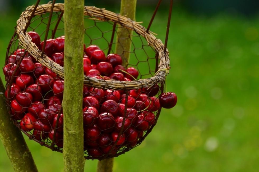 Най-вкусното време: 5 рецепти с череши за лятото