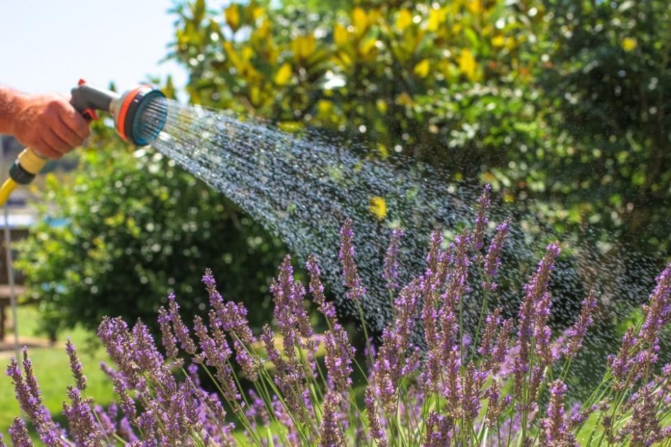 Как да поливаме любимите си растения през лятото?