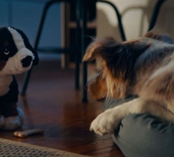 Домът е там, където кучето ни е щастливо
