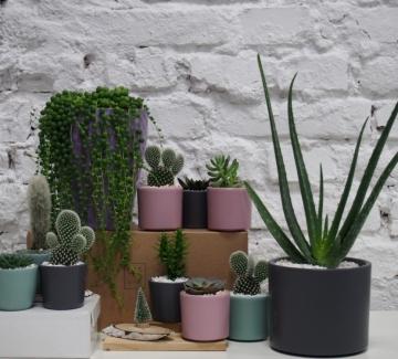Проектът с грижа за по-зелена и красива среда