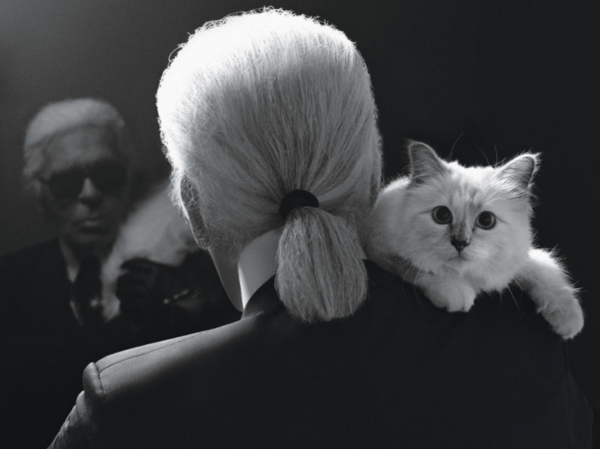 Най-известната котка в света с нова книга