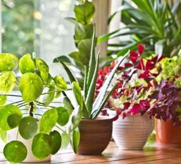 Кои стайни растения са опасни за домашните ни любимци?