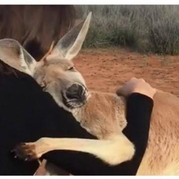 Какво наистина се случва в Австралия?