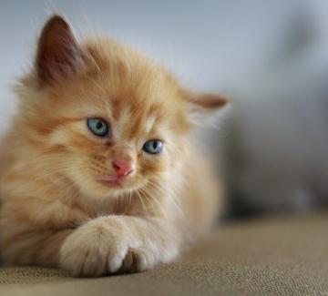 Котките – некоронованите кралици на карантината
