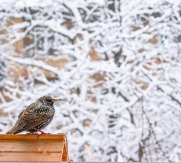 Птичи размисли