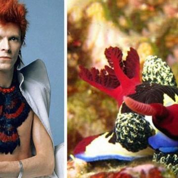 30 сюрреалистични снимки на големия Дейвид Боуи и... плужеците