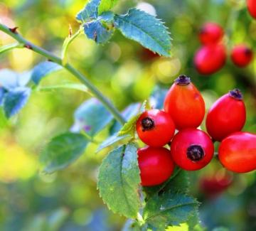 Витамин C – повече здраве и свежест през топлите месеци
