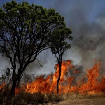 Амазонските пожари: между лъжите и екокризата