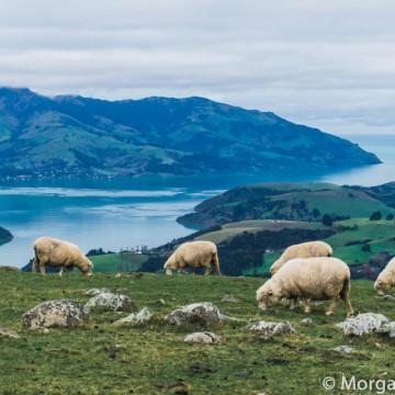 Любимата Нова Зеландия в 35 спиращи дъха кадъра